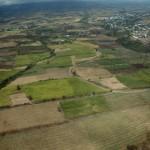 champ de cannes à sucre agriculture sucre