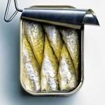 Sardines Robert 2